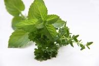 herbs-3606074_1920